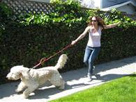 dog pulling leash